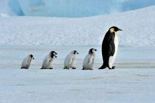 New Penguin Algorithm Will Be in Real Time